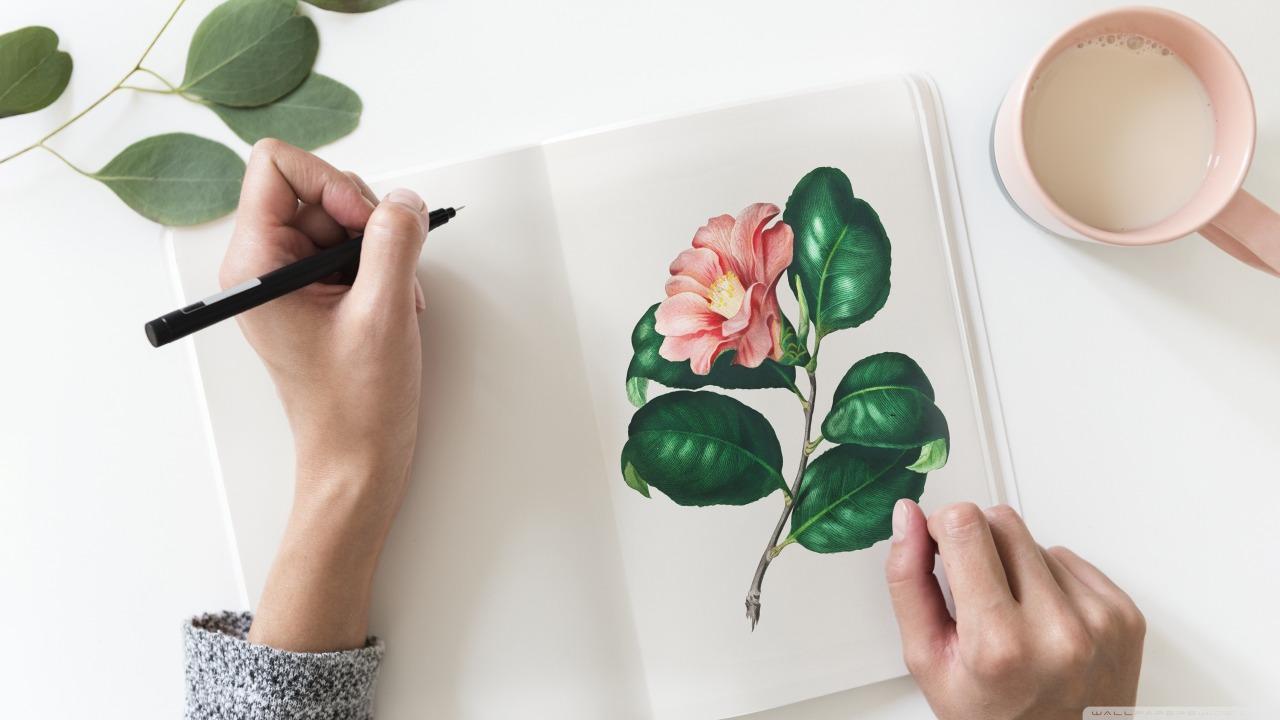 desenho flor