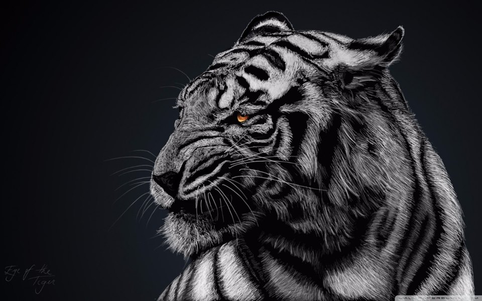 foto tigre