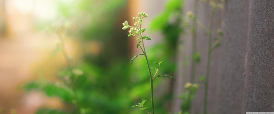 foto verde ramo
