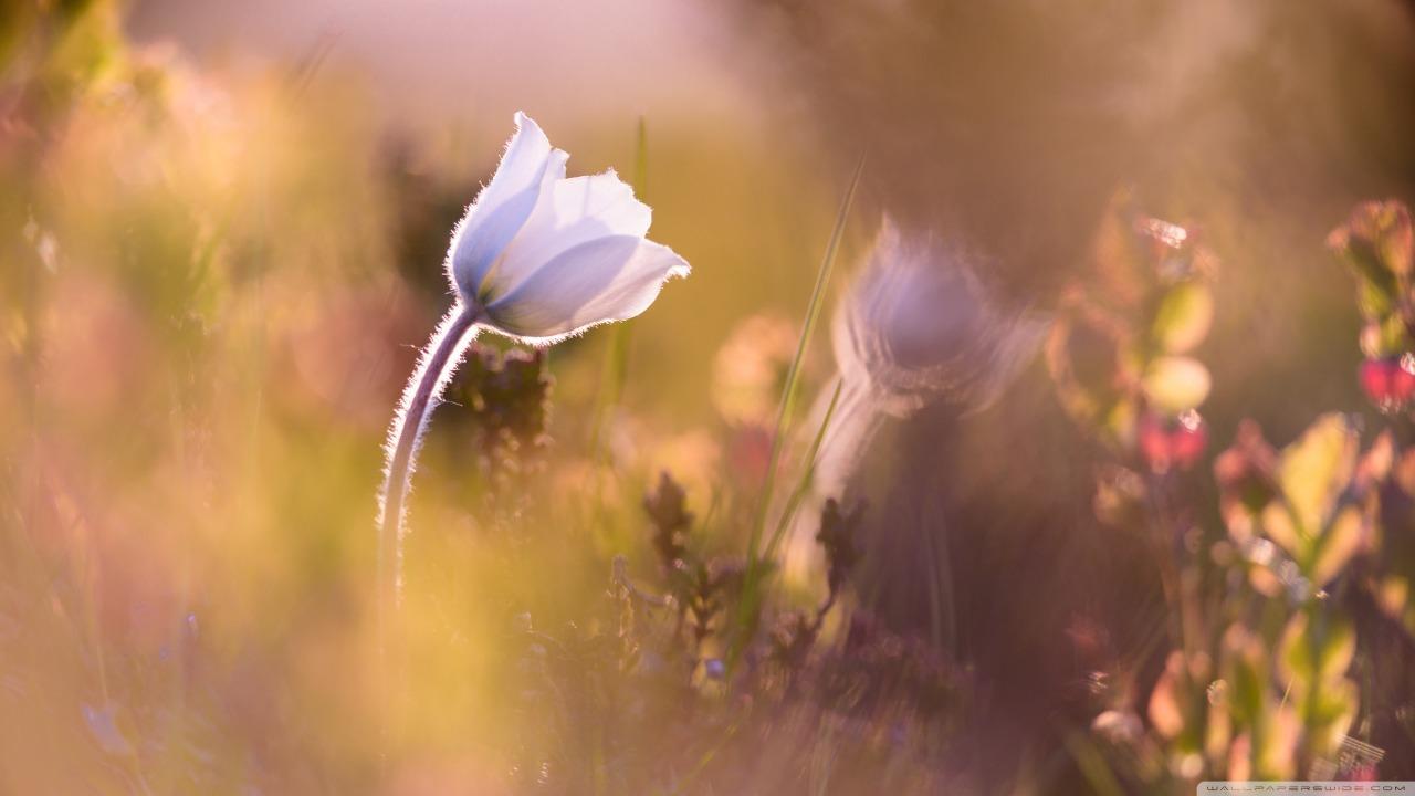flor bege
