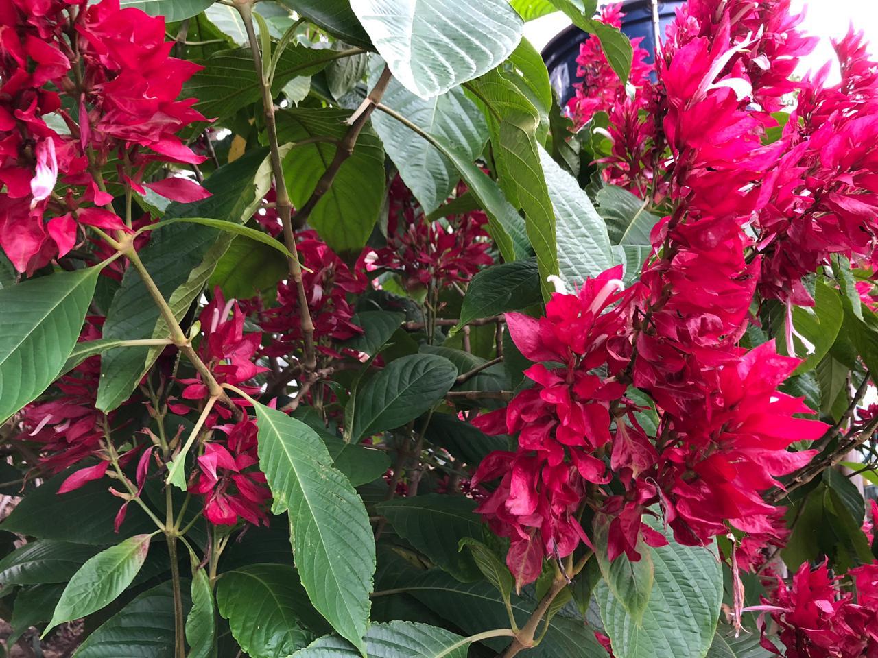 flores vermelhas 09
