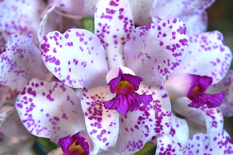 orquideas-marcelo