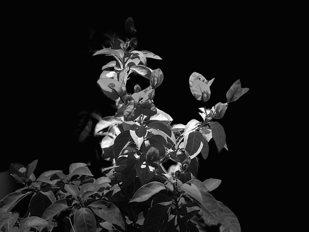 folhagem preto e branco