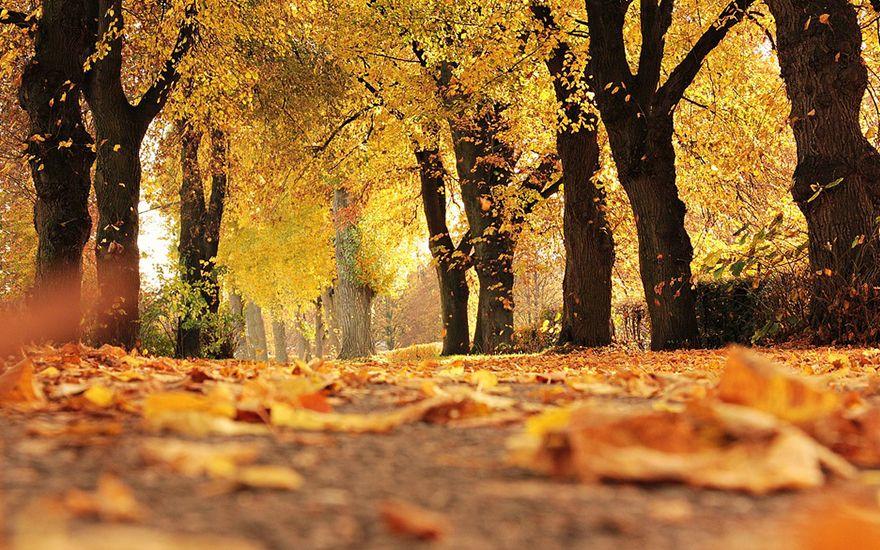 foto outono
