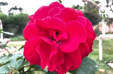 flor 09