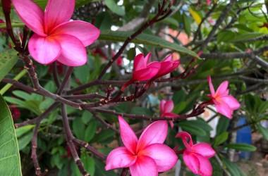 flor pink 09