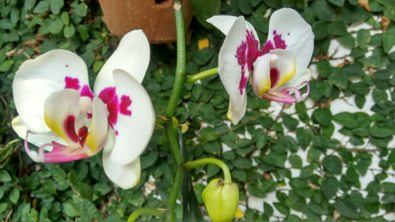 orquídea 4 x